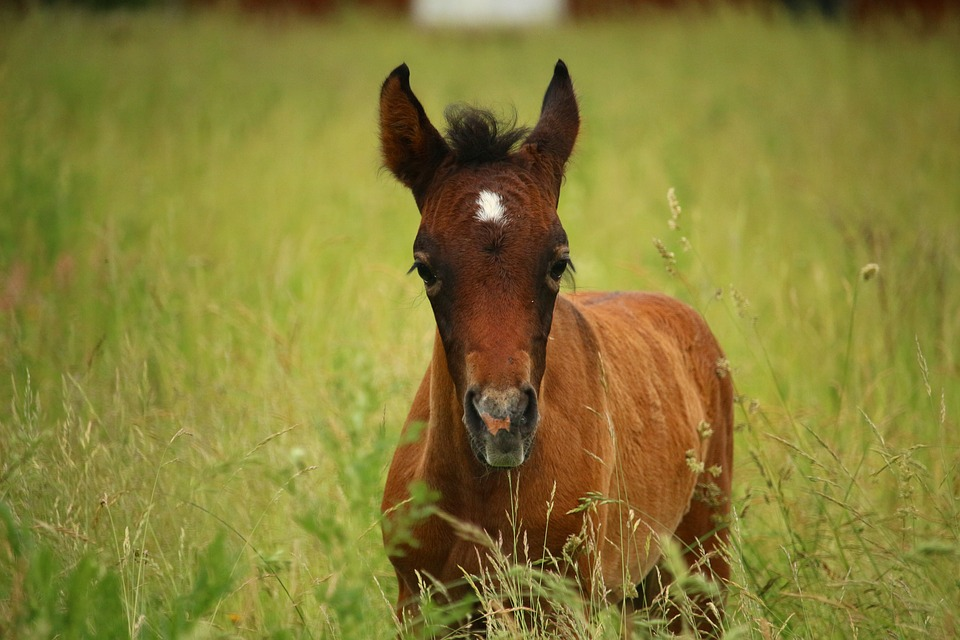 horse-1446709_960_720