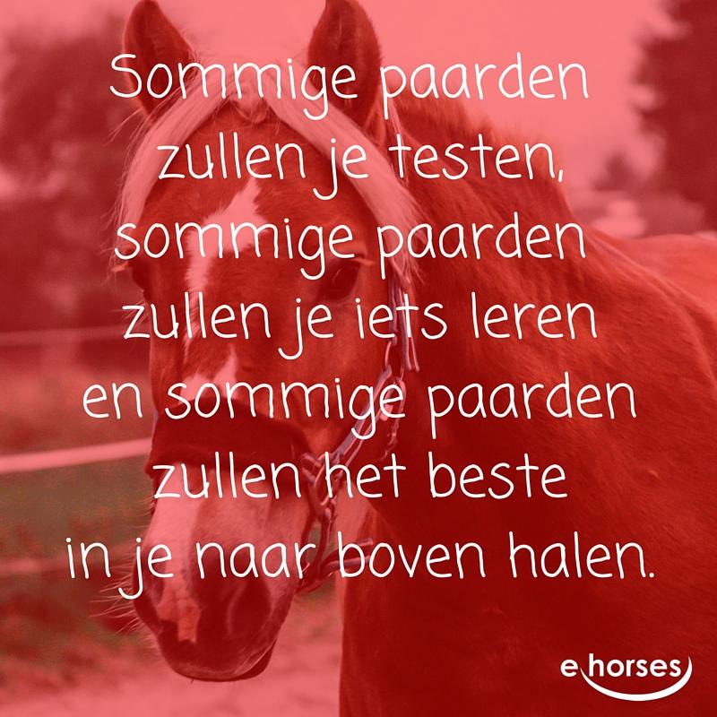 NL sommige paarden