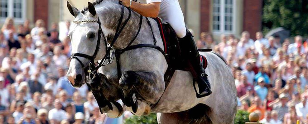 Springen in de paardensport