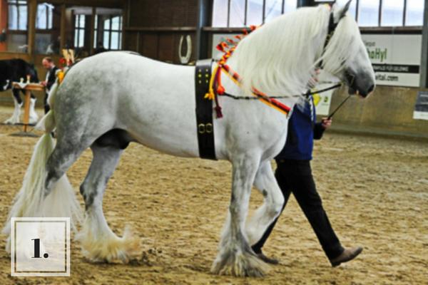 Top 10 verkooppaarden van deze week bij ehorses