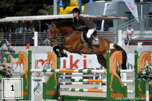 Top 10 Oldenburger verkooppaarden van deze week op ehorses