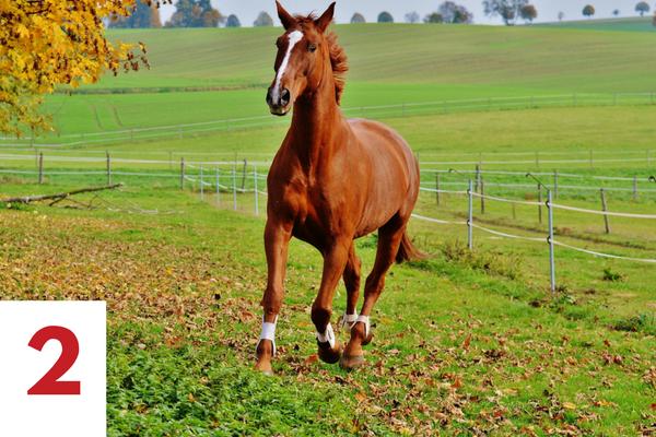 goede beglijding van het eigen paard