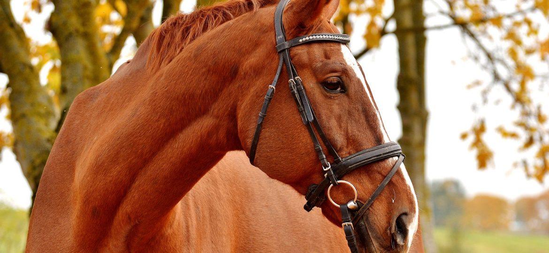 6 type paarden die je tegen kan komen op je paarden zoektocht