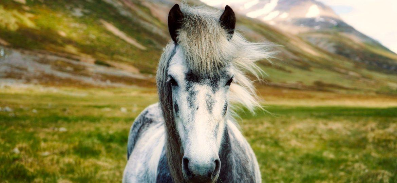 Top 10 pony's van deze week op ehorses