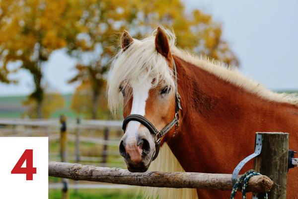 paard beschrijving