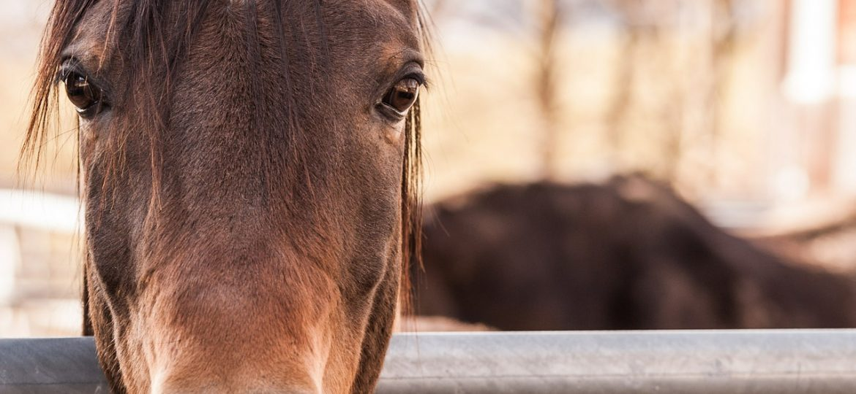 Je oude paard terugkopen?