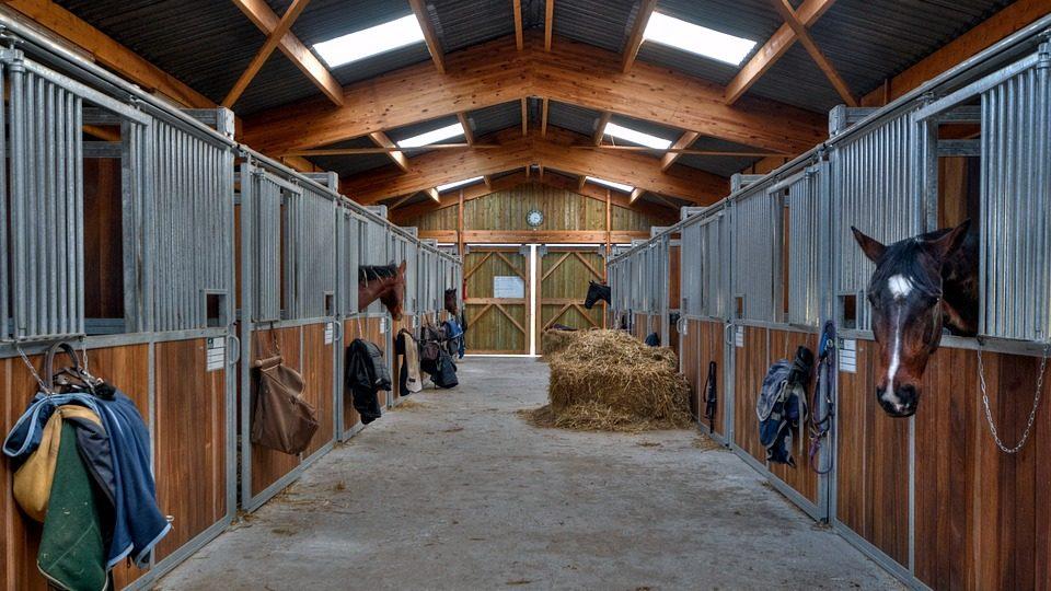 Je paard bij huis of op een stal, wat zijn de verschillen?