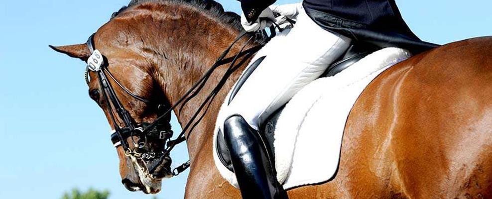 Top 10 Dressuurpaarden