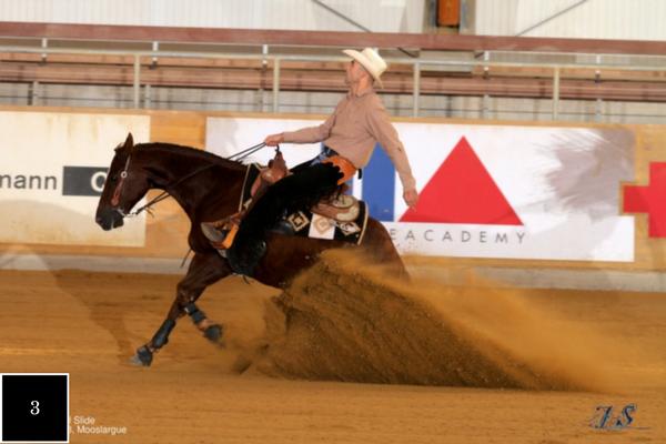 Top 10 Quarter Horses van de week