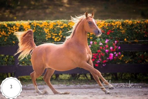Top 10 Western Paarden op ehorses
