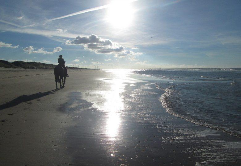 Gratis paardrijden op reizen wereldwijd!
