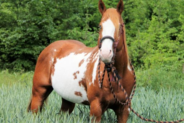 Top 10 Hengsten van ehorses