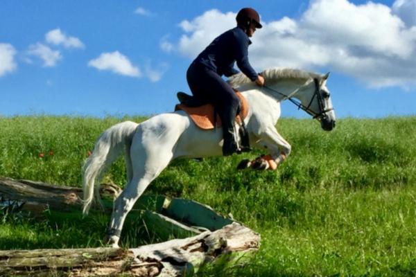 Top 10 Connemara Pony's