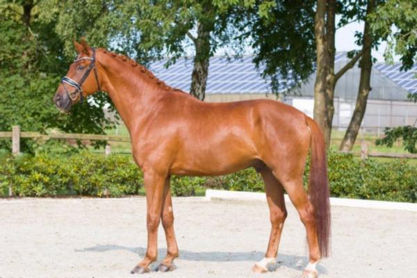 Top 10 Oldenburger paarden