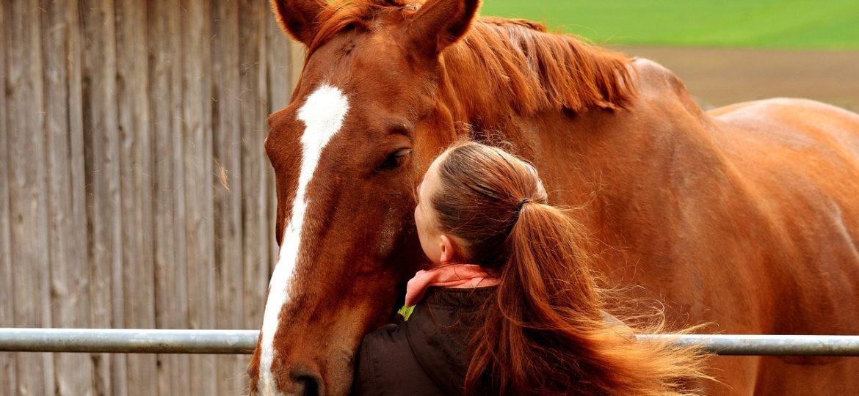 6 tekenen dat jij klaar bent voor je eigen paard