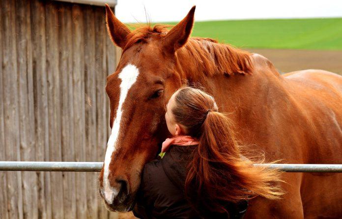 eigen paard