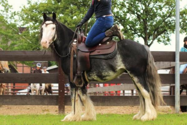 Top 10 Tinker paarden