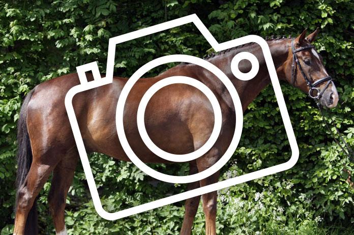De perfecte foto voor de verkoop van je paard