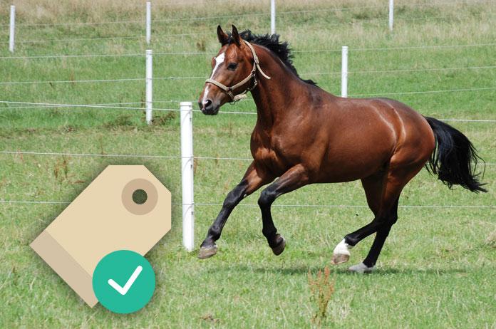 De juiste prijs voor een paard