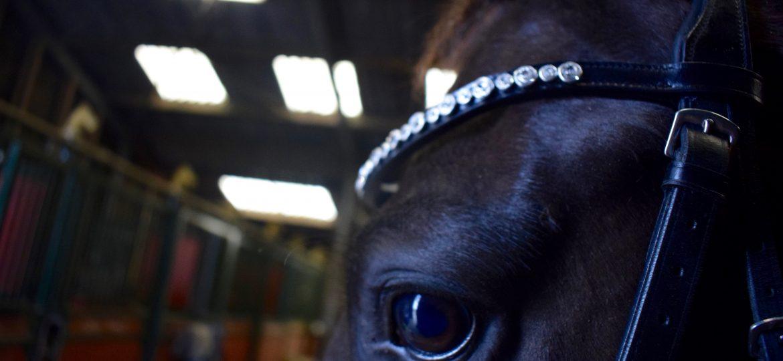 Swarovski op het voorhoofd van je paard? Dat kan!