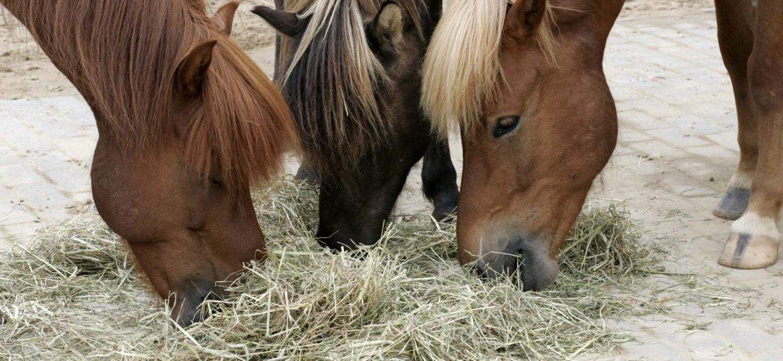 Paardenvoer – etiketten lezen