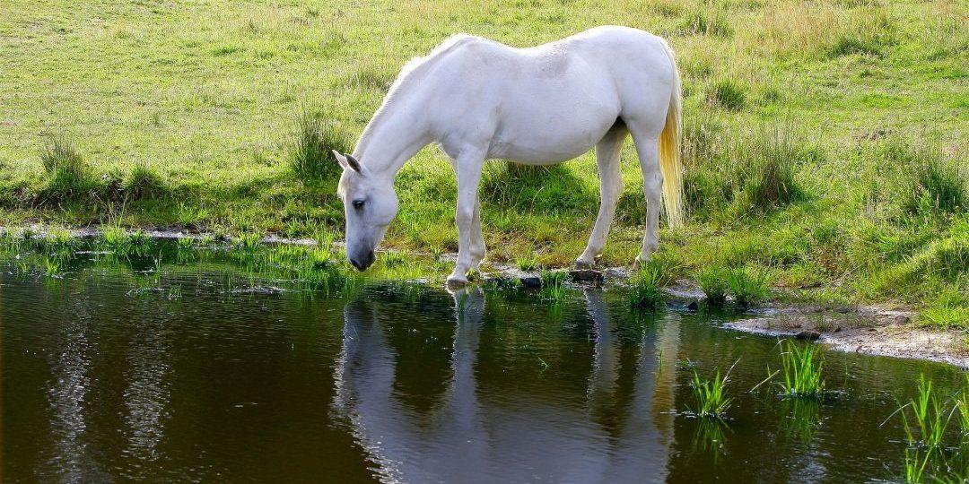Sta jij wel eens stil bij de kwaliteit van het stilstaande drinkwater?