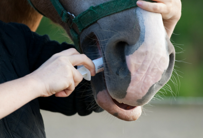 Paard Ontworming
