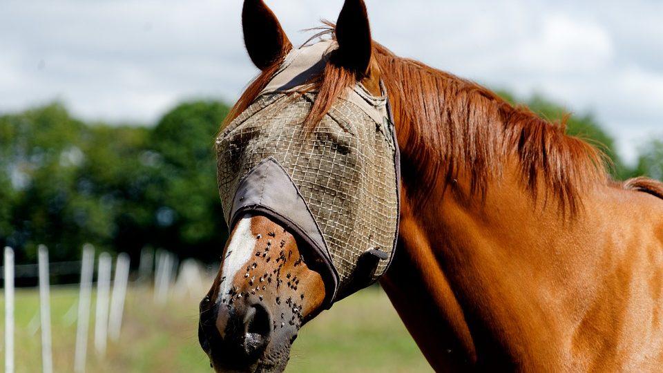 Ongedierte op stal en in de weide, om knettergek van te worden!
