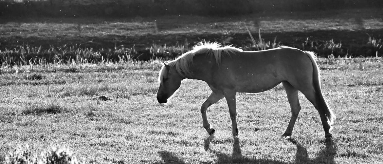 Peesbeschadiging bij het paard – Zo help je bij het herstel