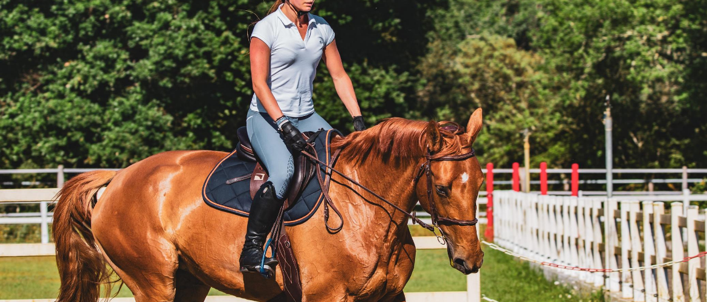 Een paard leasen: dit is wat je moet weten