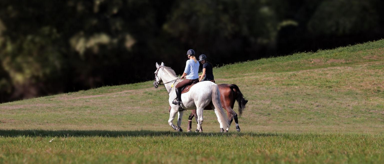 Wat kost een paard?