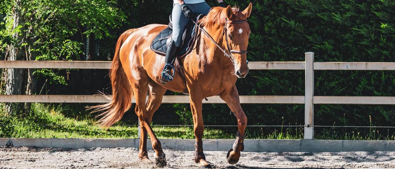 Een paard inrijden: zo doe je dat