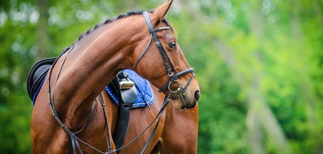 Een maagzweer bij een paard – Hier moet je op letten