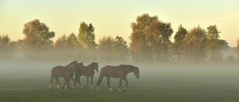 Paarden ontwormen – Dit is belangrijk