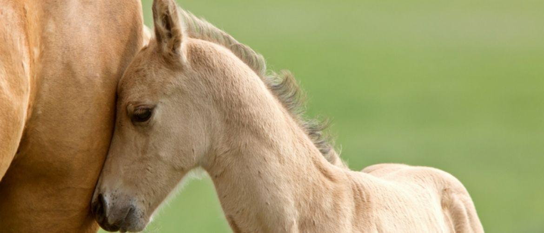 De betekenis van paardennamen en het vinden van de juiste paardennaam