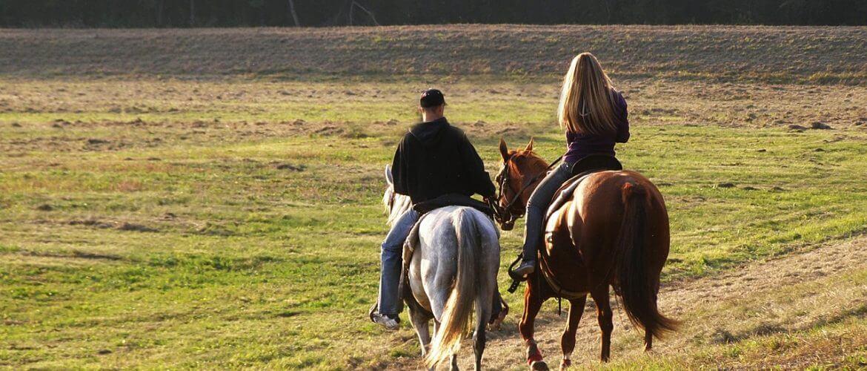 Een paardenverzekering afsluiten – Het belang van een goede paardenverzekering
