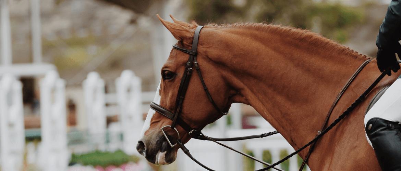 Tips voor het (online) verkopen van paarden